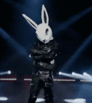 foto coniglio il cantante mascherato