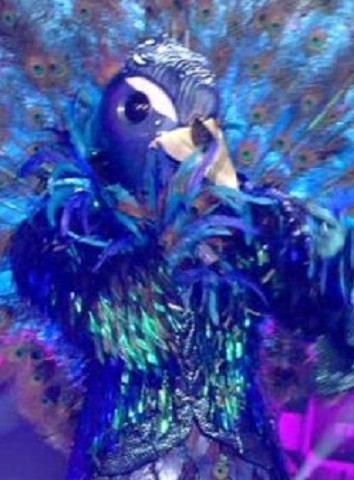 foto Pavone cantante mascherato